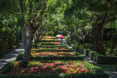 Filoli Bloom